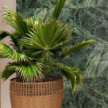 Decovita - Verde Tikal